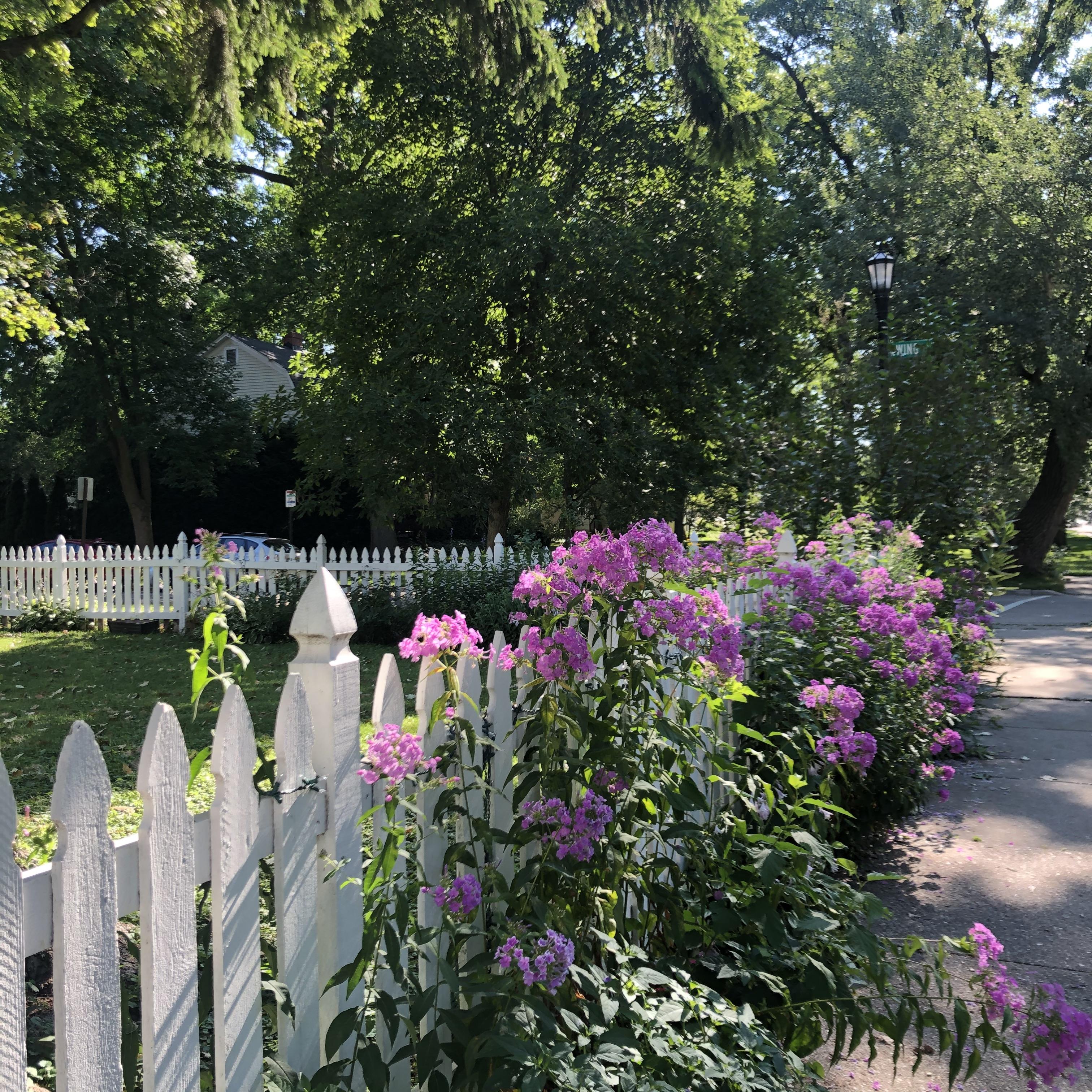 Neighborhood beauty